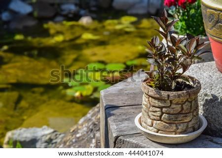 Beautiful landscaping - stock photo