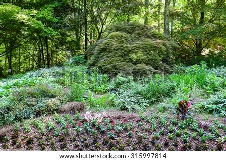Beautiful landscaping in a lush, green public garden - stock photo