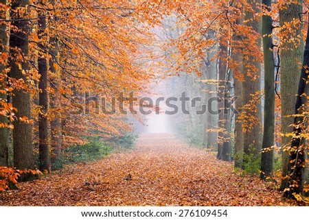 Beautiful lane with tall trees on both sides of the pathway in autumn at dawn with beautiful light, leading to a colorful and symmetrical composition in Breda, Netherlands - stock photo