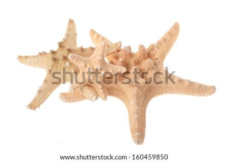 Beautiful large starfish/Three starfish of different sizes isolated on the white - stock photo