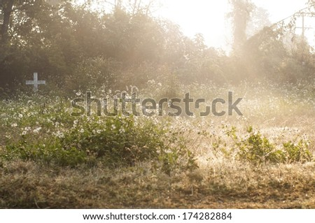 beautiful life light on flower meadow in the cemetery - stock photo
