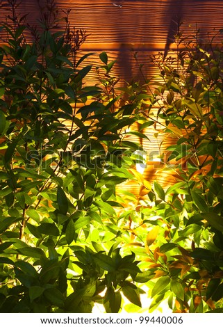 beautiful light and shadow of bush planting outdoor at night