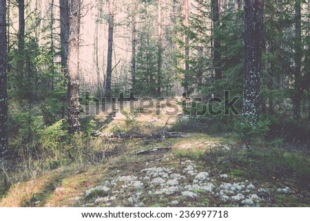 beautiful light beams in forest through trees in misty morning - retro, vintage style look - stock photo