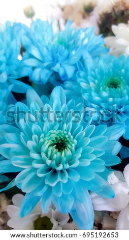 Beautiful light blue aster flower in soft dreamy light