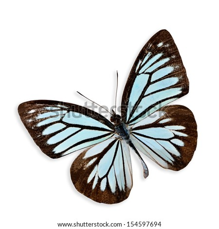 Beautiful Light Blue Butterfly isolated on white background with soft shadow - stock photo