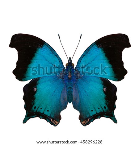 Beautiful light blue butterfly, the Wizard (Rhinopalpa polynice) in fancy color profile isolated on white background, exotic creature