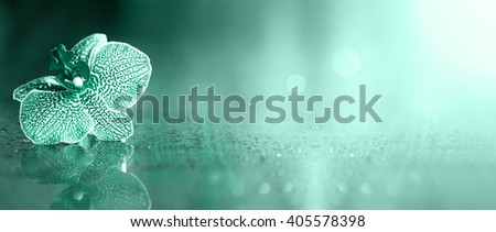 Beautiful light blue orchid flower banner with copy space - stock photo