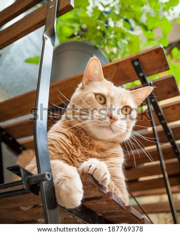 Beautiful light ginger tabby cat sitting relaxed on a chair outside under a table and plant - stock photo
