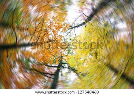 beautiful light in a green and beautiful forest (rotate photo) - stock photo
