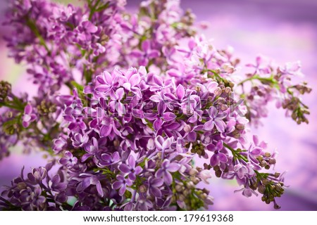 Beautiful lilac background with violet flowers - stock photo
