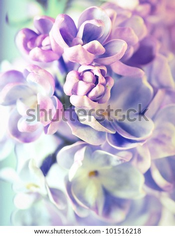 Beautiful lilac flowers background - stock photo