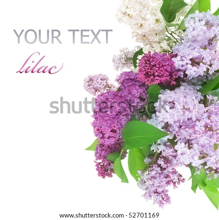 Beautiful Lilac Flowers border - stock photo
