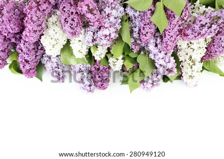 Beautiful lilac isolated on white - stock photo
