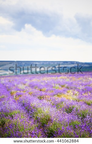 Beautiful lilac lavender flower field on a background of mountains and cloudy sky. - stock photo