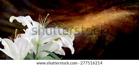 Beautiful lilies with sincere condolences - white lilies on left hand side with golden energy formation streaming across in background  - stock photo
