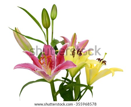 beautiful lily flower bouquet isolated on white background - stock photo