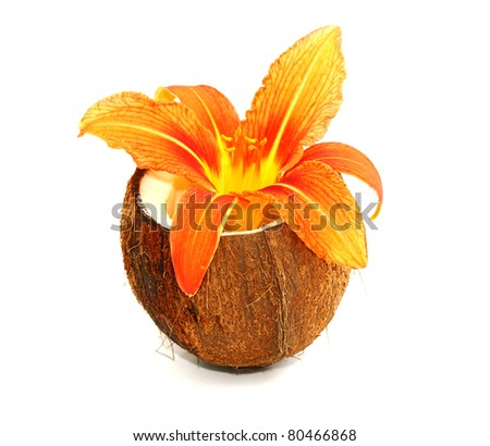 Beautiful lily flower on coconut - stock photo