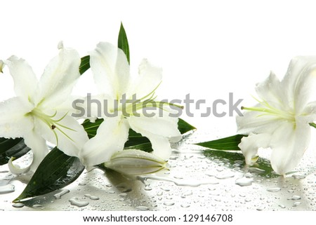 Beautiful lily, isolated on white - stock photo