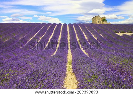 beautiful lines of lavander fields, Provance, France