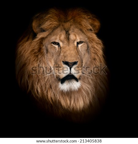 Beautiful lion on a black background. - stock photo