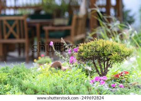 Beautiful little bush in the garden - stock photo