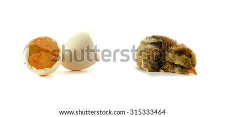 beautiful little chicken, egg and eggshell isolated on the white - stock photo