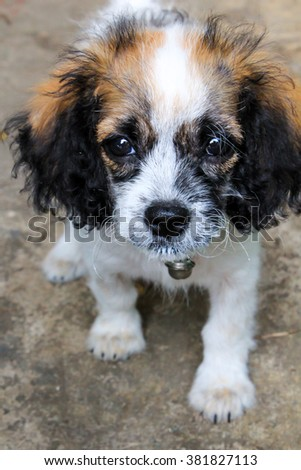 Beautiful little fluffy puppy on cement background