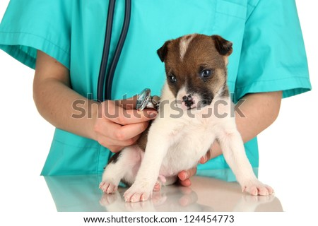 Beautiful little puppy on inspection by veterinarian isolated on white