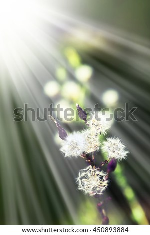 Beautiful little white flowers with the leaves in the sunshine, vintage retro hipster image with summer bloom. Autumn pink flowers - stock photo