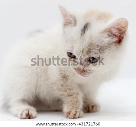 beautiful little white kitten dirty