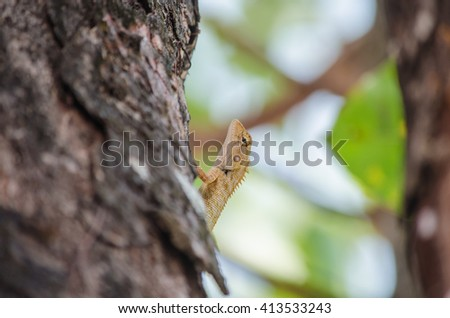 Beautiful lizard stading on the tree in sunny day.