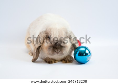 Beautiful lop-eared rabbit with Christmas decorations