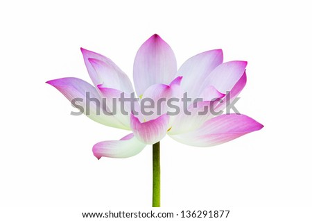 Beautiful lotus blossom isolated on white, with clipping path.