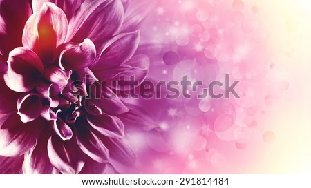 Beautiful lotus flower, abstract floral backgrounds with beauty bokeh - stock photo