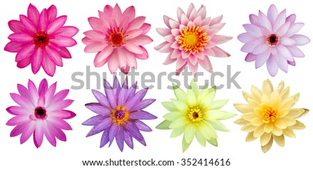 Beautiful lotus flowers top view isolated stock photo safe to use beautiful lotus flowers top view isolated mightylinksfo