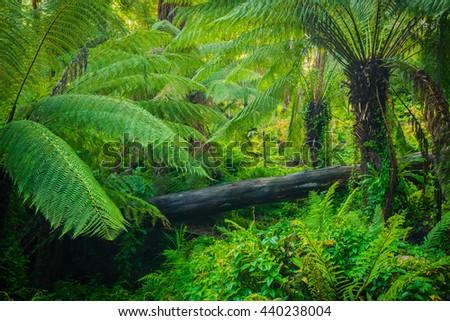 Beautiful lush palms growing wild - stock photo