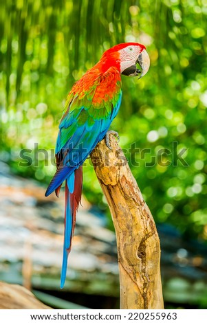 Beautiful Macaw birds.