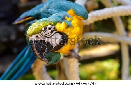 Beautiful Macaw Parrot in an Aviary. parrot
