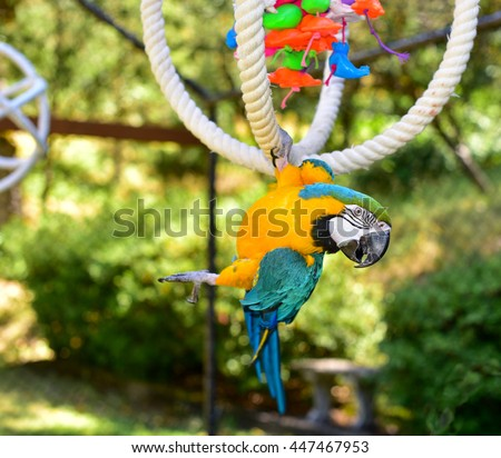 Beautiful Macaw Parrot in an Aviary. parrot. large parrot