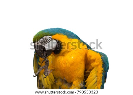 beautiful macaw parrot on a white background. blue and yellow parrot
