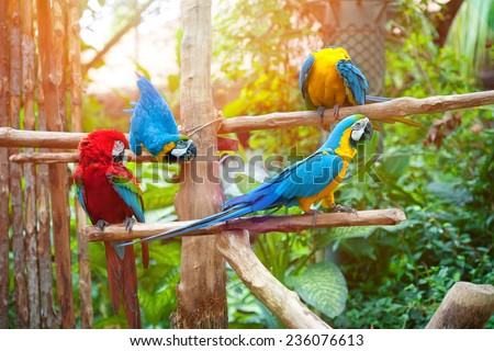 Beautiful macaws perched on a wooden post enjoying the warmth of the evening sun