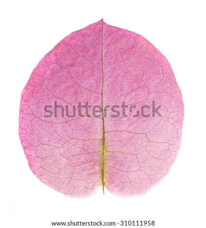 beautiful macro leaf isolated on the white  - stock photo