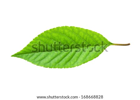 Beautiful macro photo of green leaf, isolated on white background - stock photo