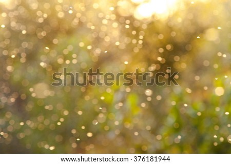 beautiful magical forest at sunset with sunlight - stock photo