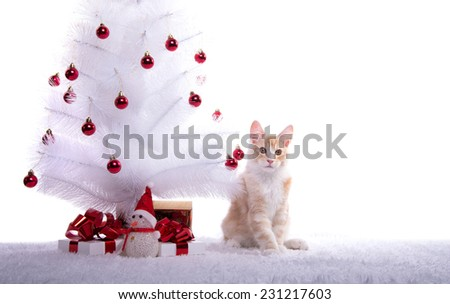 Beautiful Maine Coon sitting under the Christmas tree. Gift Boxes. New Year's holidays