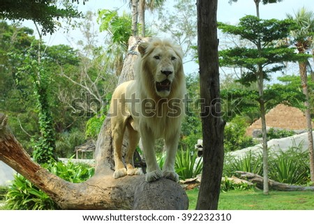 beautiful male white lion in some tropical forest - stock photo