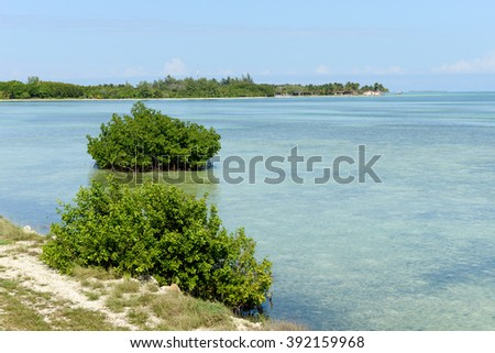 Beautiful mangrove and sea landscape at Coyo Cocco on Cuba