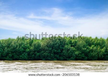 Beautiful mangrove of Thailand. - stock photo