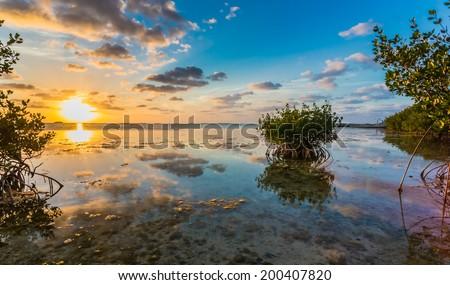 Beautiful mangrove swamp at sunset in Florida Keys - stock photo
