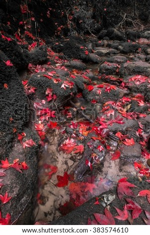 Beautiful Maple leafs are fallen on water in Phu Kradueng National Park, Loei, Thailand